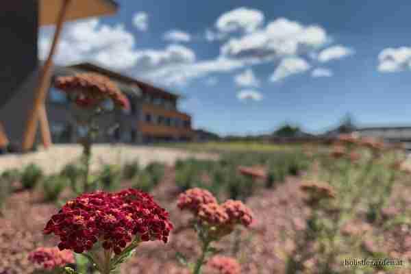 http://holisticgarden.at/data/image/thumpnail/image.php?image=167/holisticgarten_at_dachbegrnung_article_3428_0.jpg&width=600