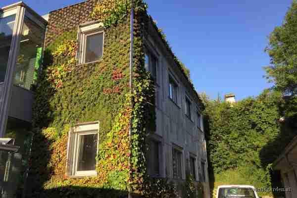 http://holisticgarden.at/data/image/thumpnail/image.php?image=167/holisticgarten_at_fassadenbegrnung_article_3418_1.jpg&width=600