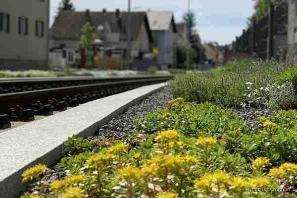 http://holisticgarden.at/data/image/thumpnail/image.php?image=167/holisticgarten_at_gleisbegrnung_article_3418_0.jpg&width=600