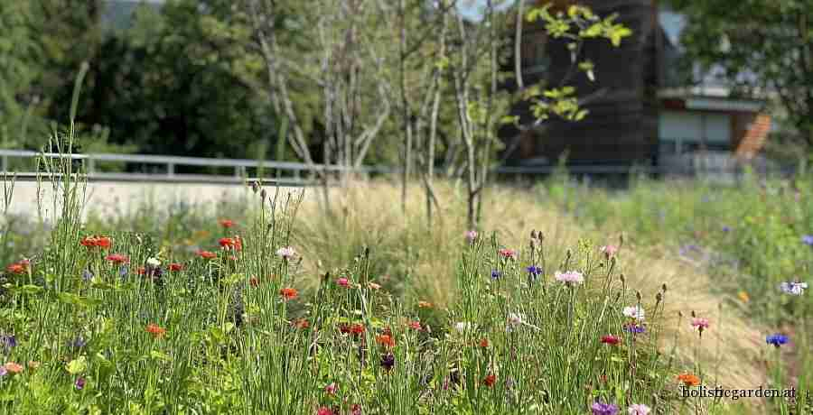 http://holisticgarden.at/data/image/thumpnail/image.php?image=167/holisticgarten_at_lebensrume_article_3423_1.jpg&width=900